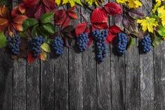 Folhas de outono selvagens da uva no fundo de madeira Fotografia de Stock Royalty Free