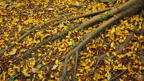 Folhas de outono sob as árvores do outono - paisagem do outono Foto de Stock Royalty Free