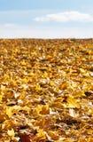Folhas de outono sob o céu imagem de stock royalty free