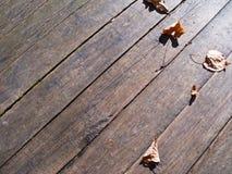 Folhas de outono sobre o assoalho das placas de madeira Fotos de Stock Royalty Free