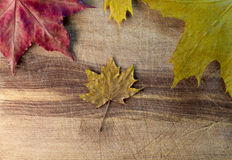 Folhas de outono sobre o fundo de madeira Imagens de Stock Royalty Free