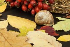 Folhas de outono sobre o fundo de madeira com espaço da cópia Recordando novembro Decoração das folhas secas das árvores Fotografia de Stock Royalty Free