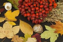 Folhas de outono sobre o fundo de madeira com espaço da cópia Recordando novembro Decoração das folhas secas das árvores Imagens de Stock Royalty Free