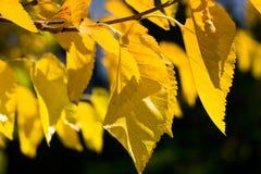 Folhas de outono sobre o fundo verde Fotos de Stock Royalty Free