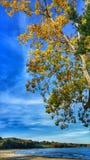 Folhas de outono sobre o parque de Edgewater, Cleveland Foto de Stock Royalty Free