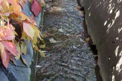 Folhas de outono sobre a vala de irrigação Fotos de Stock
