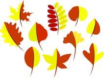 Folhas de outono de uma árvore ilustração stock