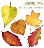 Folhas de outono uma cor de água em um fundo branco Imagens de Stock
