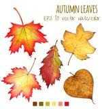 Folhas de outono uma cor de água em um fundo branco Foto de Stock