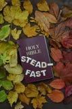 Folhas de outono variáveis com a Bíblia e palavra constante fotos de stock royalty free