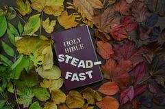 Folhas de outono variáveis com a Bíblia e palavra constante imagem de stock