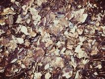Folhas de outono velhas Fotos de Stock