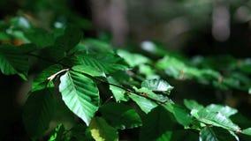 Folhas de outono verdes no vento vídeos de arquivo