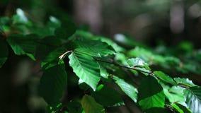 Folhas de outono verdes no vento, movimento lento video estoque
