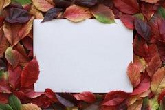 Folhas de outono vermelhas e amarelas com um quadro vazio do cartão no meio fotografia de stock