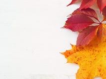 Folhas de outono vermelhas e amarelas em cima do fundo de madeira branco Fotografia de Stock