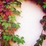 Folhas de outono vermelhas e verdes na cerca - efeito do vintage Imagem de Stock Royalty Free