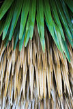 Folhas de palmeira. Imagem de Stock