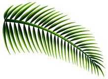 Folhas de palmeira ilustração stock