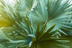 Folhas de palmeira imagem de stock royalty free