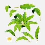 Folhas de palmeira imagens de stock royalty free