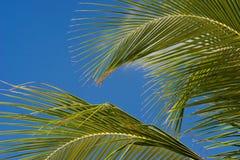 Folhas de palmeira imagens de stock