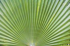 Folhas de palmeira bonitas Imagem de Stock