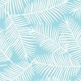 Folhas de palmeira brancas em um SE tropical exótico de Havaí do fundo azul ilustração stock
