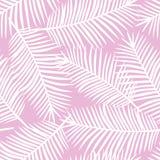 Folhas de palmeira brancas em um SE tropical exótico de Havaí do fundo cor-de-rosa Imagens de Stock Royalty Free
