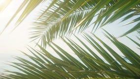 Folhas de palmeira contra o céu azul Conceito tropical do fundo da árvore filme