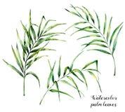 Folhas de palmeira da aquarela ajustadas Ilustração botânica pintado à mão com os ramos da palma isolados no fundo branco exotic ilustração royalty free