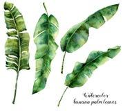 Folhas de palmeira da banana da aquarela ajustadas Ilustração botânica pintado à mão com os ramos da palma isolados no fundo bran ilustração do vetor