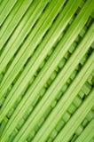 Folhas de palmeira de lingüeta Fotos de Stock Royalty Free
