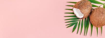 Folhas de palmeira e cocos no fundo pastel cor-de-rosa imagem de stock royalty free