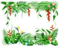 Folhas de palmeira e flores tropicais Fotografia de Stock