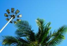 Folhas de palmeira e luz de rua verdes imagem de stock