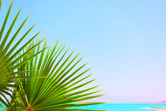 Folhas de palmeira e mar foto de stock
