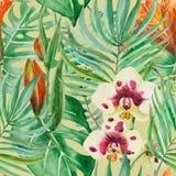 Folhas de palmeira e monstera enormes de florescência da floresta úmida, ilustração royalty free