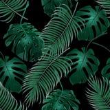 Folhas de palmeira e monstera tropicais verdes Arvoredos da selva Teste padrão floral sem emenda Isolado em um fundo preto ilustração royalty free