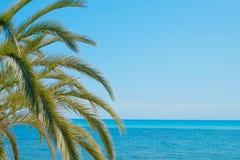 Folhas de palmeira e o mar Fotografia de Stock