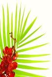 Folhas de palmeira e orquídea vermelha Fotografia de Stock Royalty Free