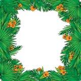Folhas de palmeira e quadro quadrado das flores Fotografia de Stock