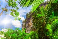 Folhas de palmeira e rocha Imagem de Stock Royalty Free