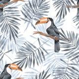 Folhas de palmeira e tucano Teste padrão sem emenda 2 da aquarela Foto de Stock