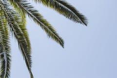 Folhas de palmeira à esquerda do céu azul Fotografia de Stock Royalty Free