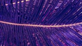 Folhas de palmeira exóticas no tom azul roxo do inclinação imagem de stock