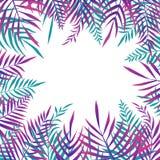 Folhas de palmeira exóticas tropicais - quadro ilustração royalty free