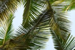 Folhas de palmeira - fundo abstrato verde Foto de Stock Royalty Free