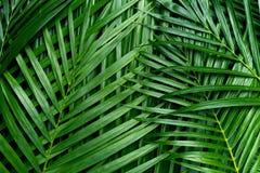 Folhas de palmeira, fundo das hortaliças imagens de stock