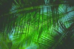 Folhas de palmeira - fundo natural verde abstrato com borrão foto de stock